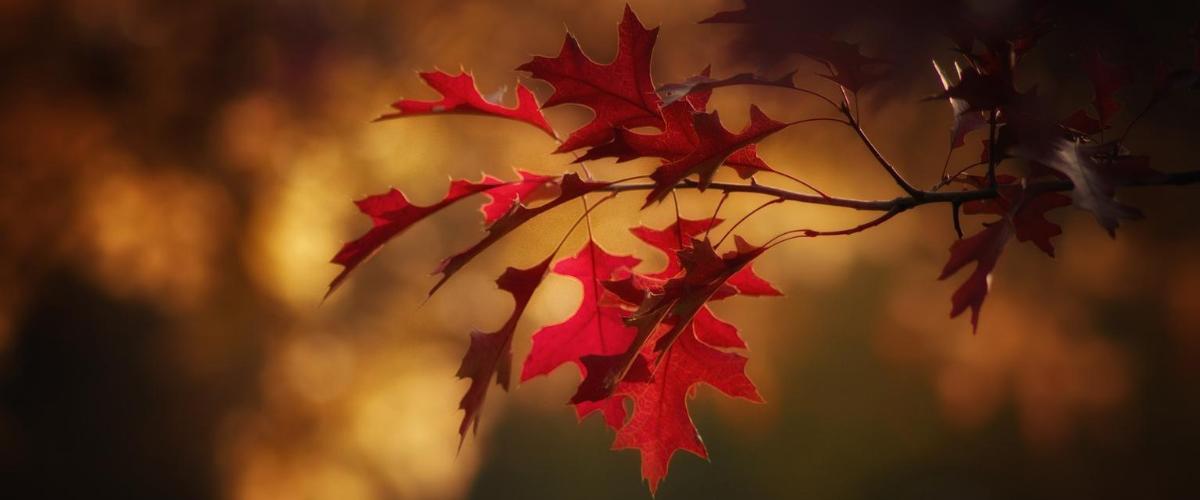 Efterår er Lungernes tid